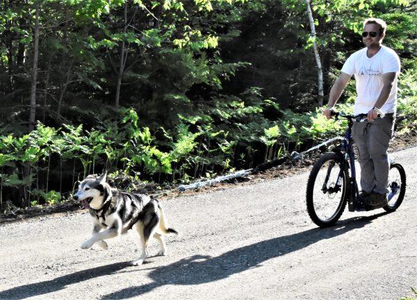Cani-Trottinette